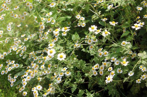 2 marguerites paris 23 juin 2012 059 (2).jpg
