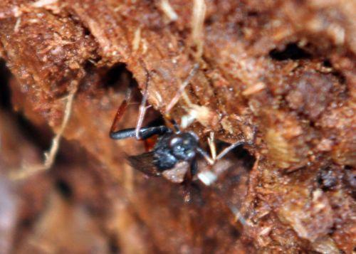 insecte bois grimpe romi 22 février 027.jpg