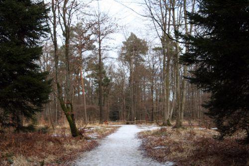 verzy forêt 13 janv 014.jpg
