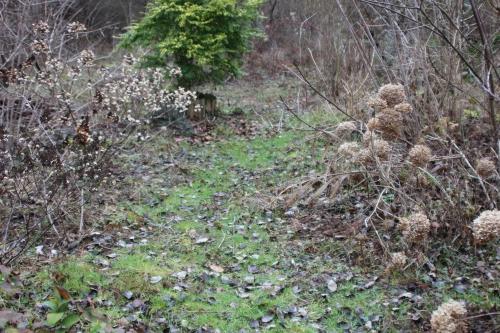 1 hydrangea romilly 1 fev 2016 032 (1).jpg