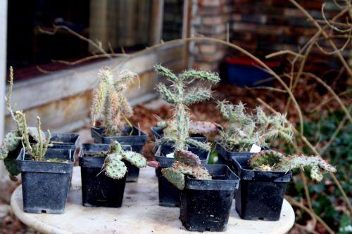cactus 18 février 004.jpg
