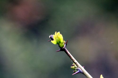 sim romi 28 avril 2012 020.jpg