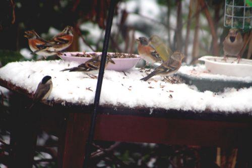 oiseaux dessus 19 déc 2010 028.jpg