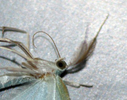 papillon rec veneux 13 janv 2014 006.jpg