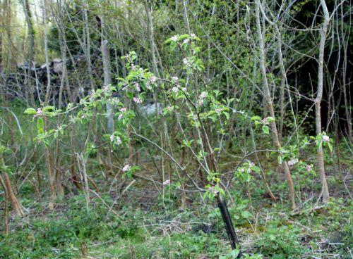 4 winter banana romi 22 avril 2012 053.jpg