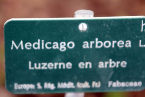 medicago 3 paris 21 janv 2012 166.jpg