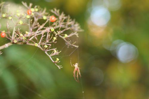 araignée 10 oct 007.jpg