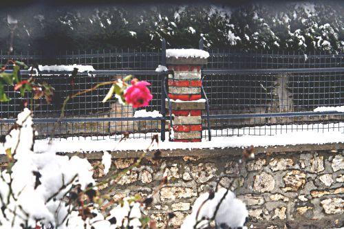 neiges rose 20 déc 2010 p 052.jpg