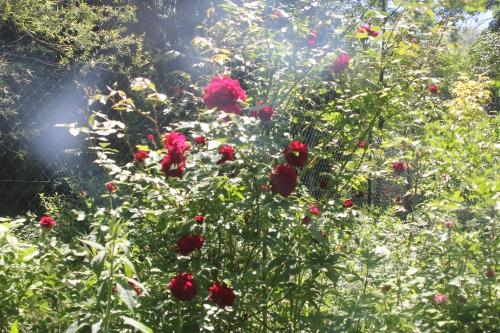 10 red parfum romi 4 juin 2015 015.jpg