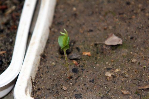 3 veneux 17 mars 2012 026.jpg