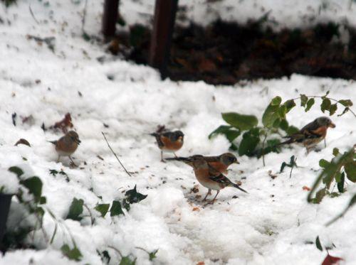 oiseaux sol 19 déc 2010 040.jpg