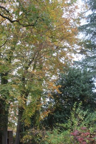 1 automne veneux 6 nov 2015 032 (4).jpg