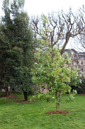 drimys 1 paris 21 janv 2012 013.jpg