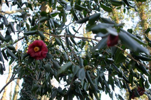 adolphe 1 veneux 3 fev 2012 006.jpg