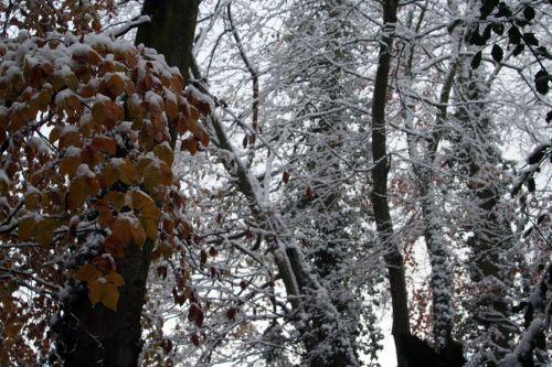 neige 29 nov 2010 013.jpg