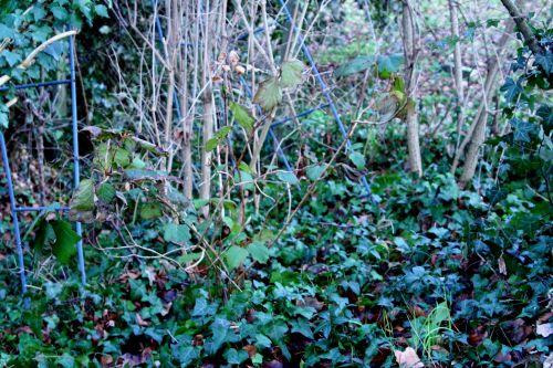 querci veneux 22 janvier 006.jpg