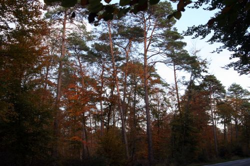 tout rouge forêts 26 oct 006.jpg