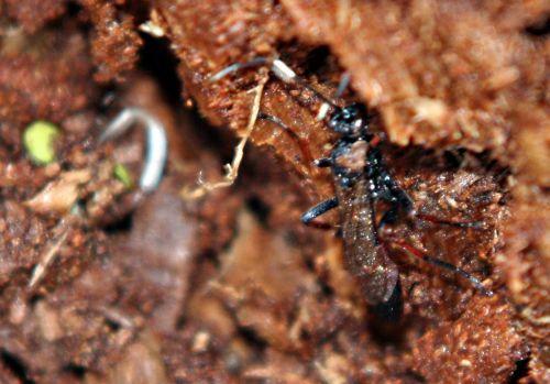 insecte bois romi p 22 février 025.jpg