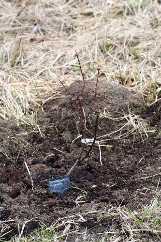 tigranii 27 fev 2008.jpg