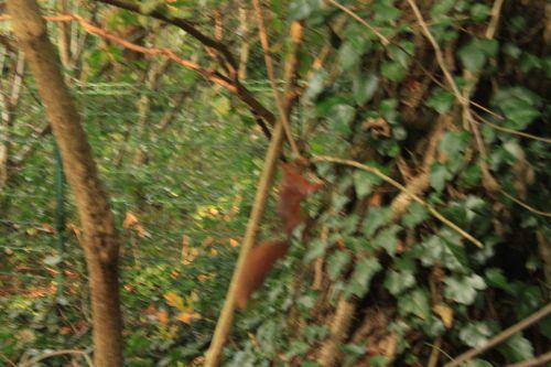 1 écureuil veneux 24 sept 2014.jpg