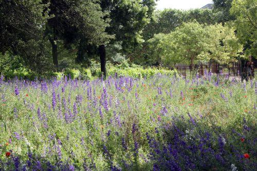 prairie paris 23 juin 2012 443.jpg