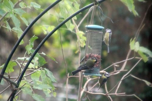 oiseaux 29 nov 2012 019.jpg