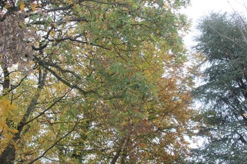 4 automne veneux 6 nov 2015 032 (3).jpg