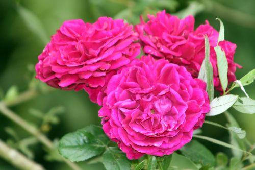 guirlande fleurie 17 juil 061.jpg
