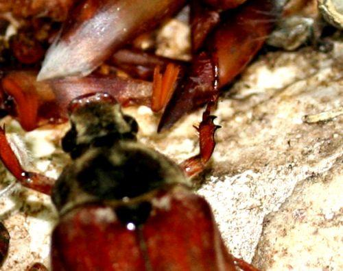 hannetons fem couple antenne 1 mai 050.jpg