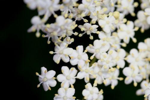 nigra fleurs paris 18 mai 150.jpg
