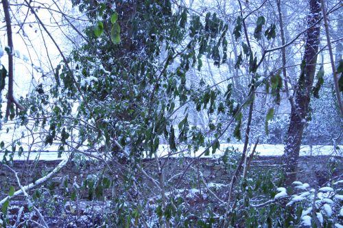 neige palmensis 17 dec 005.jpg