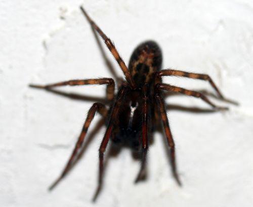 araignée 3 dec 004.jpg