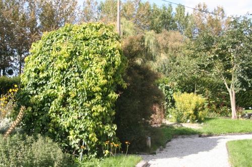 1 bignonia marnay 18 sept  2010 039.jpg