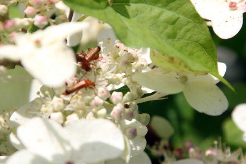 romilly 18 juil 2012 026.jpg