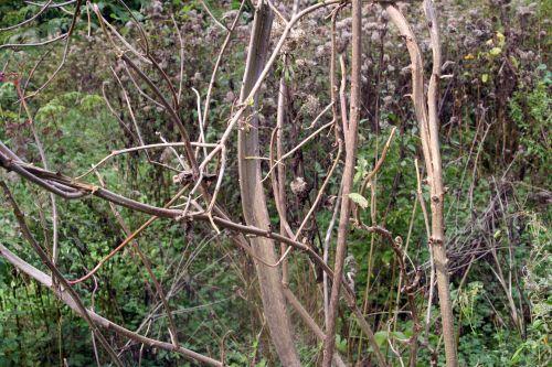 monstrosa romi 3 oct 2010 031.jpg