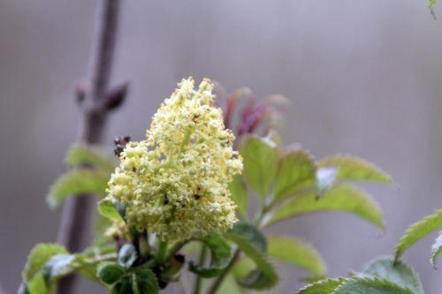 plumosa vir romi 13 avril 2012 072.jpg