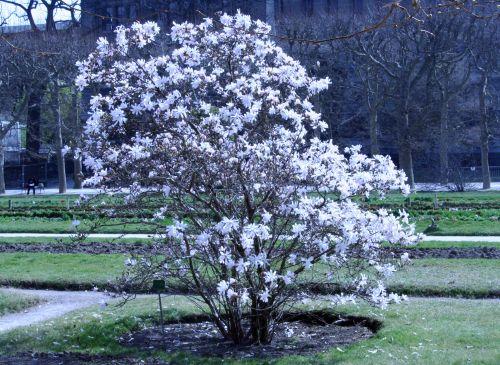magnolia stel paris 23 mars 120.jpg