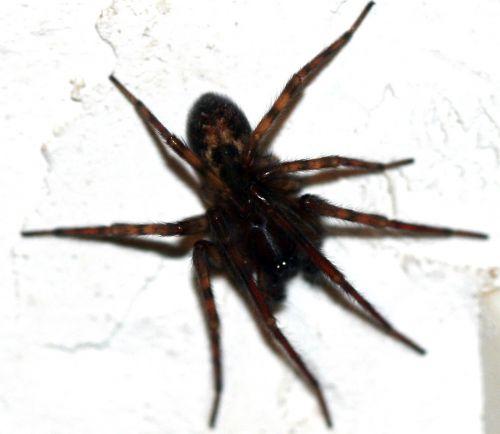 araignée 3 dec 008.jpg