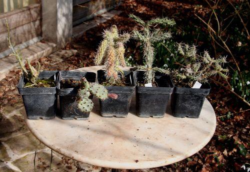cactus 18 février 009.jpg