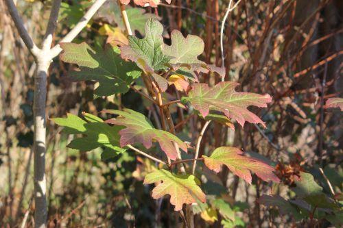 feuilles snow veneux 2 déc 2012 029.jpg
