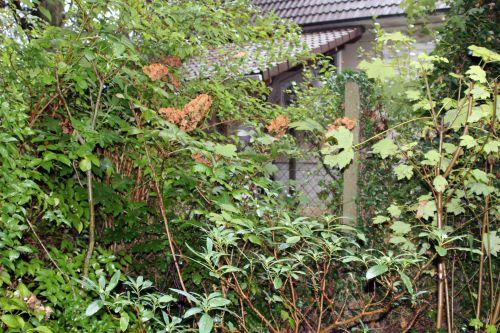 quercifolia veneux  14 octobre 2013 040 (3).jpg