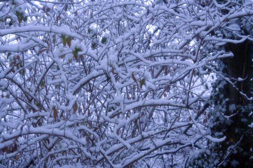neige 1 branches 18 dec 002.jpg
