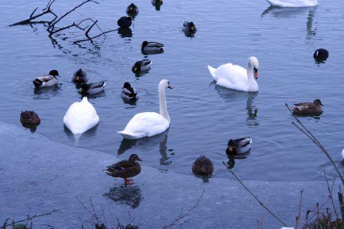 oiseaux neige 21 dec 013.jpg