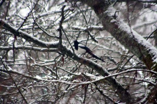 neige pie 20 février 012.jpg