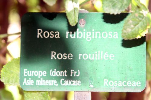 rosa rubig étiq paris 10 oct 2010 061.jpg