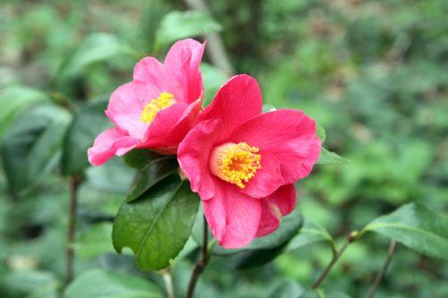 spring promise 2 7 avril 009.jpg