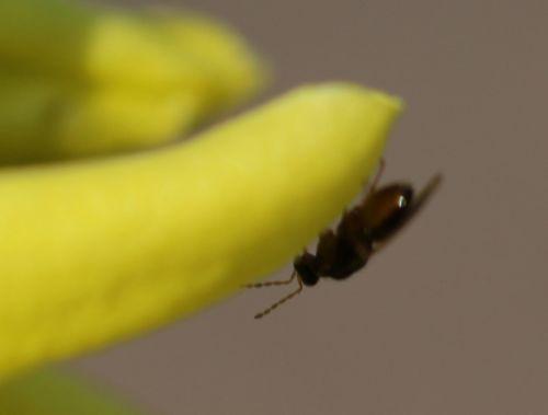 forsythia best 2 romi 15 mars 2012 074.jpg