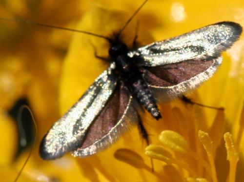 9 adela mâle 11 avril 2011 099.jpg