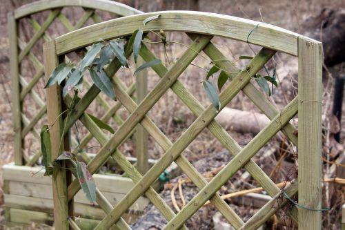 clematis arm romi 16 fev 2012 027.jpg