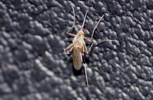 1 moustique f romi 5 juin 2013 061.jpg